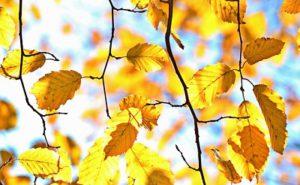 arbre-au-debut-de-l-automne