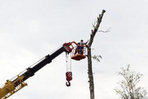 demontage-d-un-arbre-par-le-haut