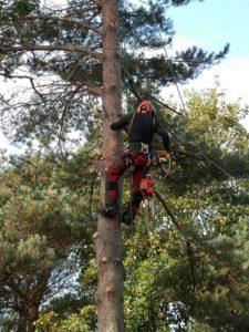 homme-qui-grimpe-a-l-arbre-avec-cordages-pour-le-couper